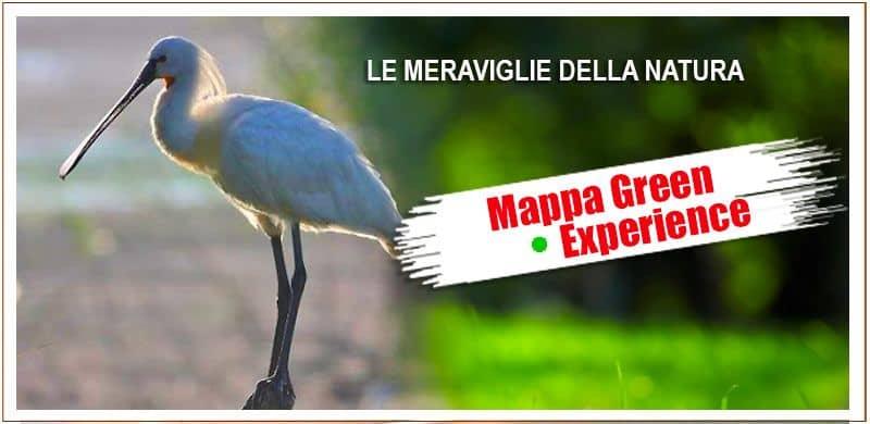 Mappa Green Experience